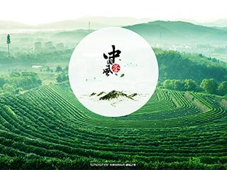 茶叶网站模板1618