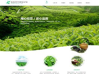茶叶网站设计|9386